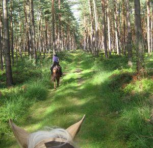 sex mit pferd Arendsee(Saxony-Anhalt)