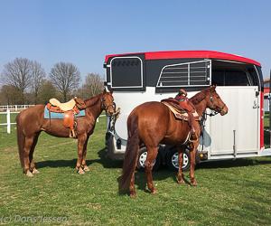 Pferdeanhaenger-Ifor-Williams-56-von-56