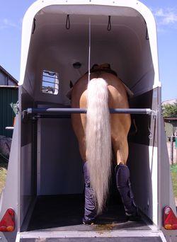 WM_Alabama-Heck-mit-Pferd