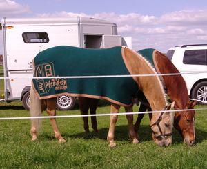 RoFlexs-mit-Pferden