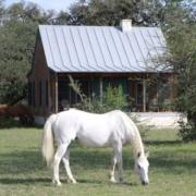 TX-Bandera-HCEL_CabinPferde-180x180