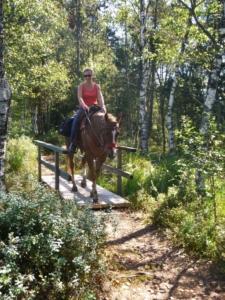 Das-Allgäu-entspannt-mit-dem-Pferd-geniessen-225x300