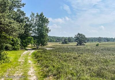 Kuppendorfer-Heide-4