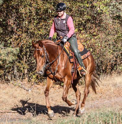 Pferd-im-Galopp